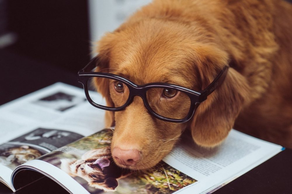 Aviatrix-Accountancy-Universal-Credit-Agency-and-Limited-companies-dog with glasses